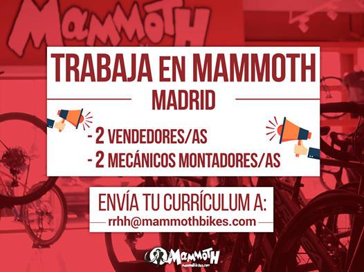 Mammoth Bikes busca trabajadores para sus tiendas de Madrid
