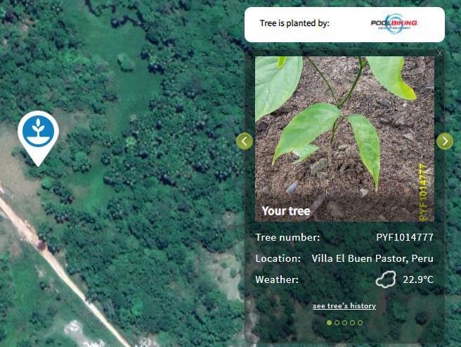 Poolbiking lanza una campaña contra la deforestación mundial